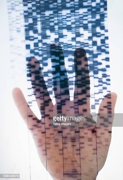 Human hand touching DNA chart