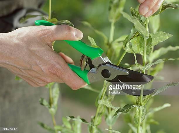 A human hand using pruning shears