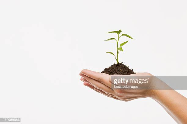 Human hands holding plant