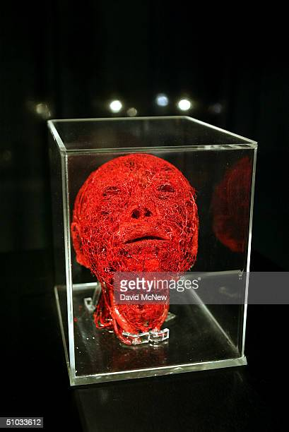 A human head shows only its arterial vascular systems at the Body Worlds The Anatomical Exhibition of Real Humans Bodies show at the California...