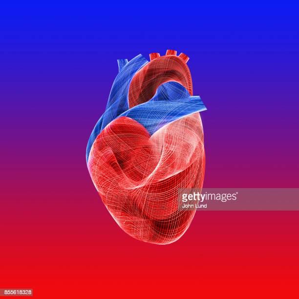 Human Heart Energies