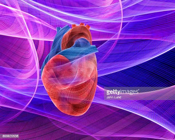 Human Heart Energy Fields