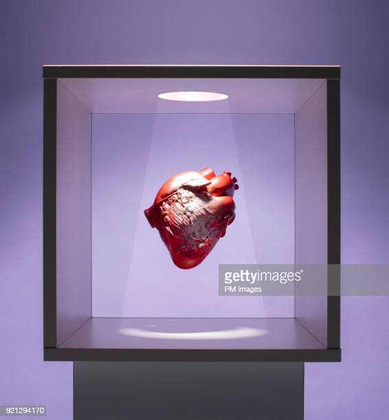 Human heart model in box