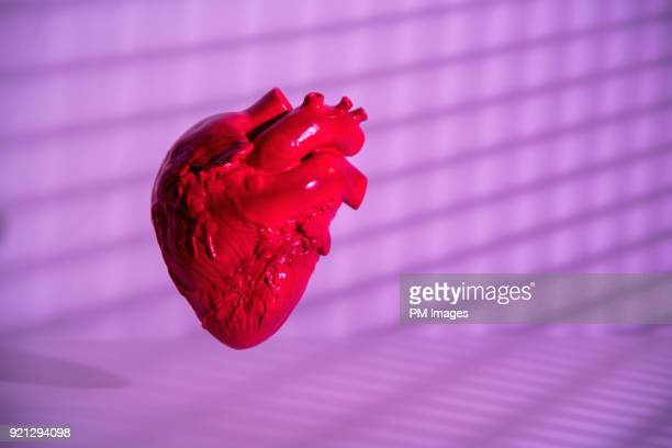 human heart model - human heart stock pictures, royalty-free photos & images