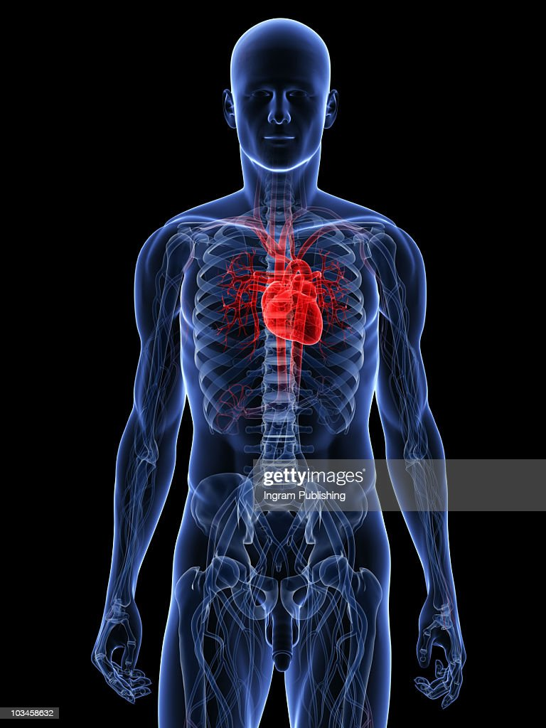 Voi Human Body Diagram Heart Wiring Diagram Services
