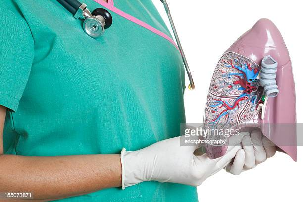 human lung - female autopsy photos stock photos and pictures