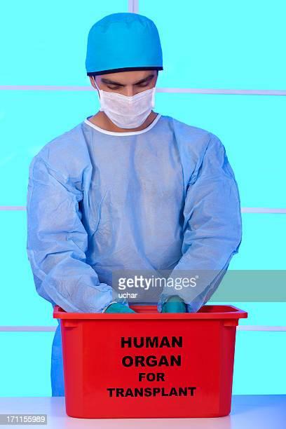 o órgão de transplante de - órgão interno humano - fotografias e filmes do acervo