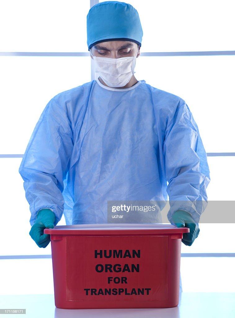 human organ for transplant : Stock Photo