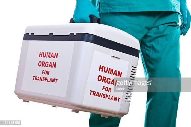 human organ transplantation - organ donation stock photos and pictures