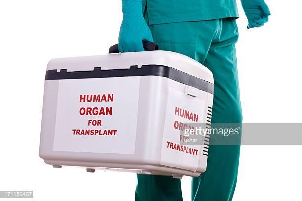 Menschliche Organ transport conductor