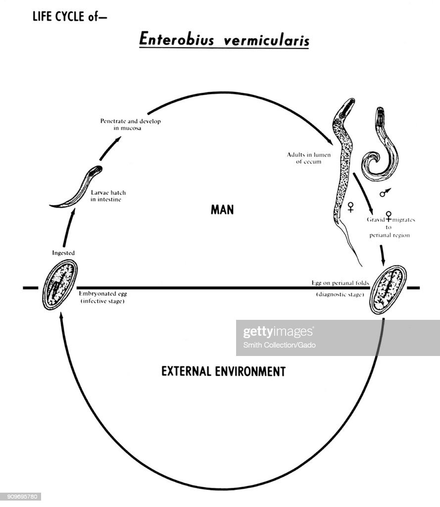 Earthworm Anatomy Diagram Labeled Simple - Car Wiring Diagrams ...