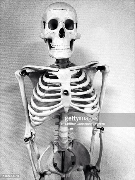 human skeleton against wall - funny skeleton stock photos and pictures