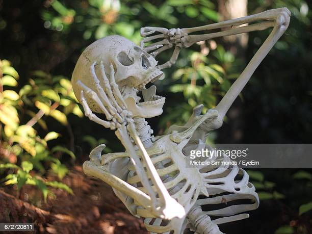 human skeleton on field - funny skeleton stock photos and pictures