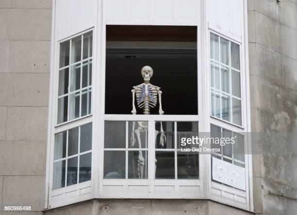 human skeleton - menschliches skelett stock-fotos und bilder