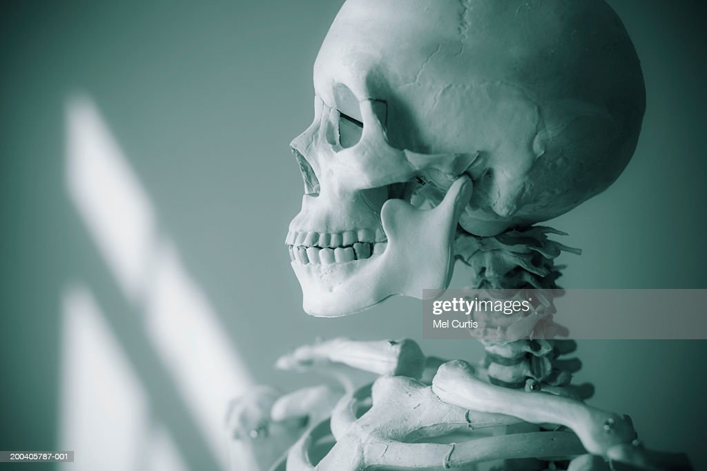 Human Skeleton Side View Stock Photo Getty Images