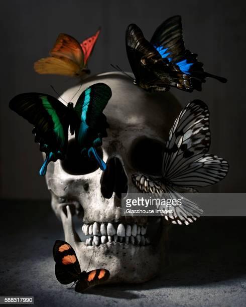 Human Skull and Butterflies