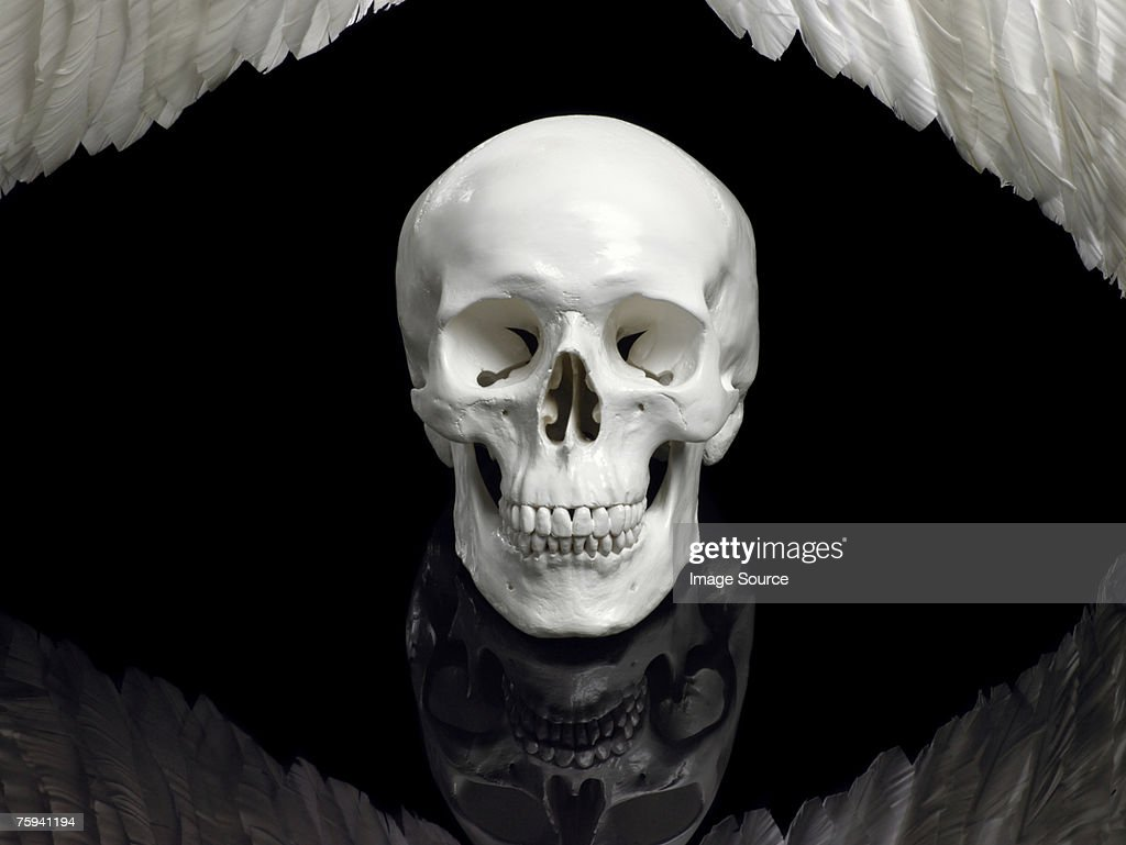 Human skull and wings : Stock Photo