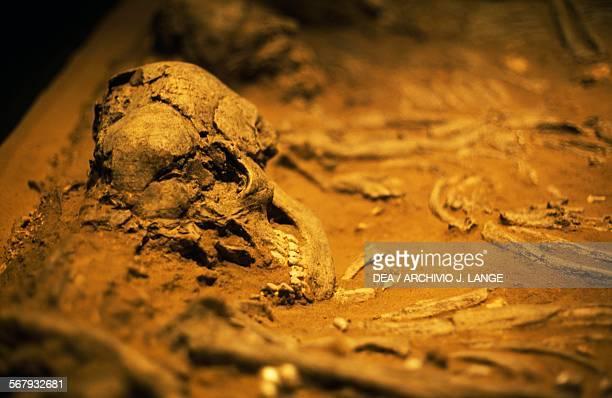 Human skull found in Jebel alBuhais Ras alKhaimah United Arab Emirates 52004300 BC Ras Al Khaimah Ras Al Khaimah National Museum