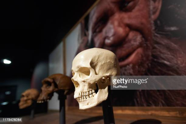 Human skull is on display with a picture of a Neanderthal man. The Museum of Natural History of Toulouse in cooperation with the Natural History...