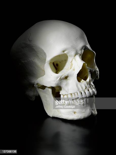 human skull on black - human skull stock pictures, royalty-free photos & images