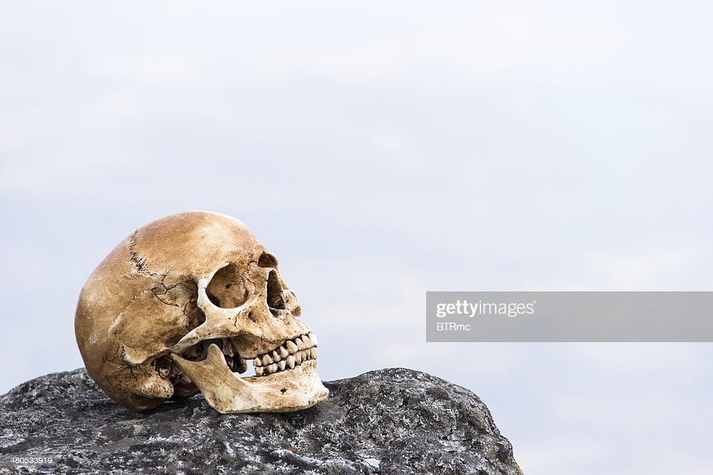 human skull on the rock : Stock Photo