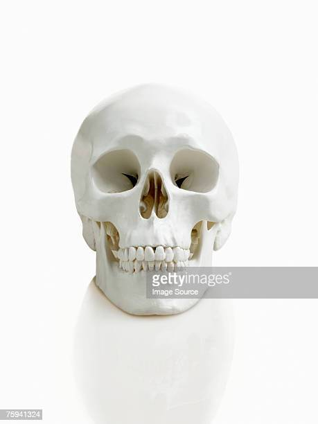 human skull - human skull stock pictures, royalty-free photos & images