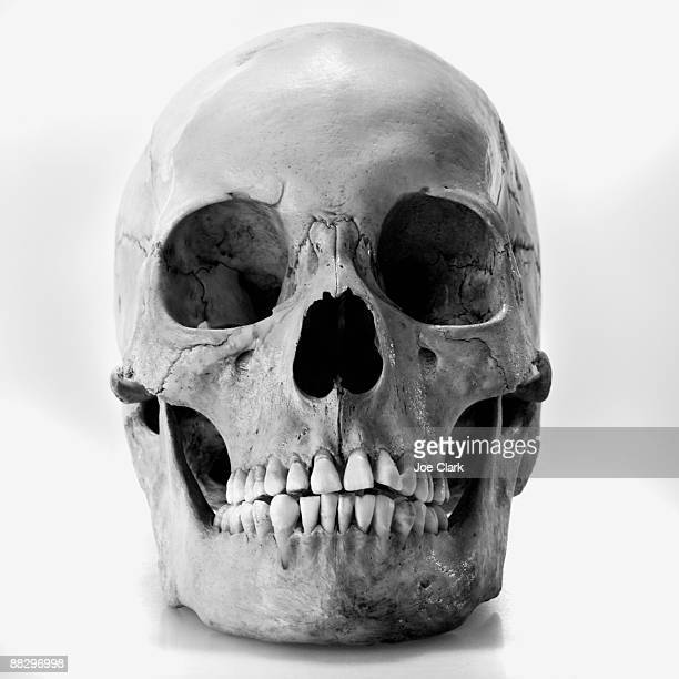 online retailer 7da13 ce7ac 60 Top Human Skull Pictures, Photos,   Images - Getty Images