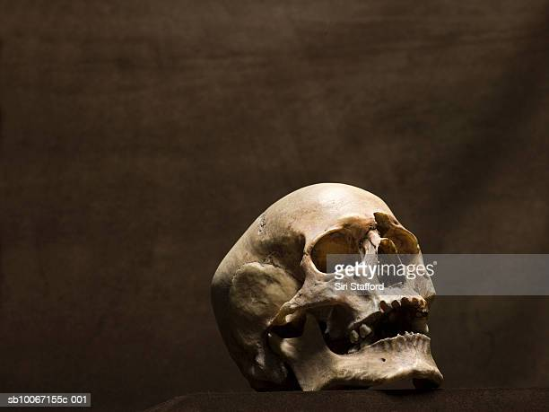 human skull, studio shot - human skull stock pictures, royalty-free photos & images