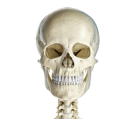 Human skull viewed from the front. 1140422053