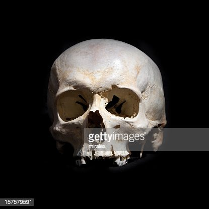 Human Skull Without Jaw Bone Stock Photo Getty Images