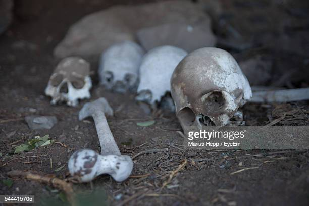 human skulls and bone on field - archaeology stock pictures, royalty-free photos & images