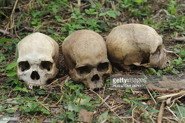 Human skulls lie on March 24 2014 in the southweatern Nigerian city of Ibadan on the bush path where rotting bodies and skeletons were discovered in...