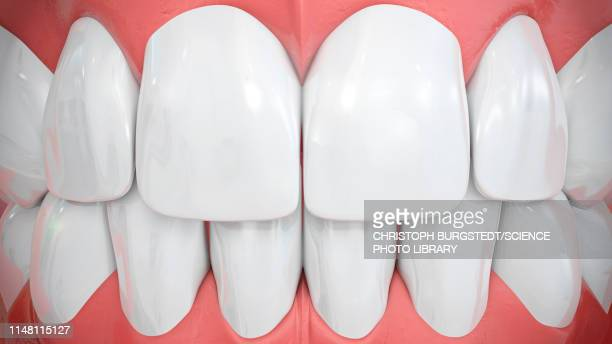 human teeth, illustration - enamel stock pictures, royalty-free photos & images