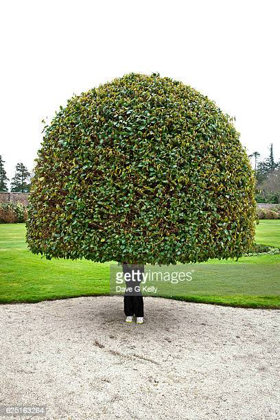 human topiary tree - topiary stock photos and pictures