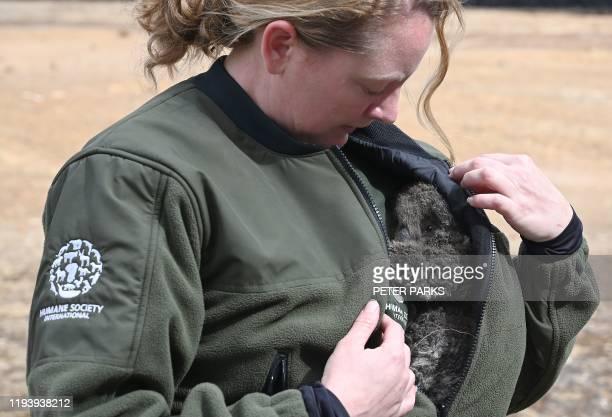 Humane Society International Crisis Response Specialist Kelly Donithan holds a baby Koala she just rescued on Kangaroo Island on January 15 2020 On...
