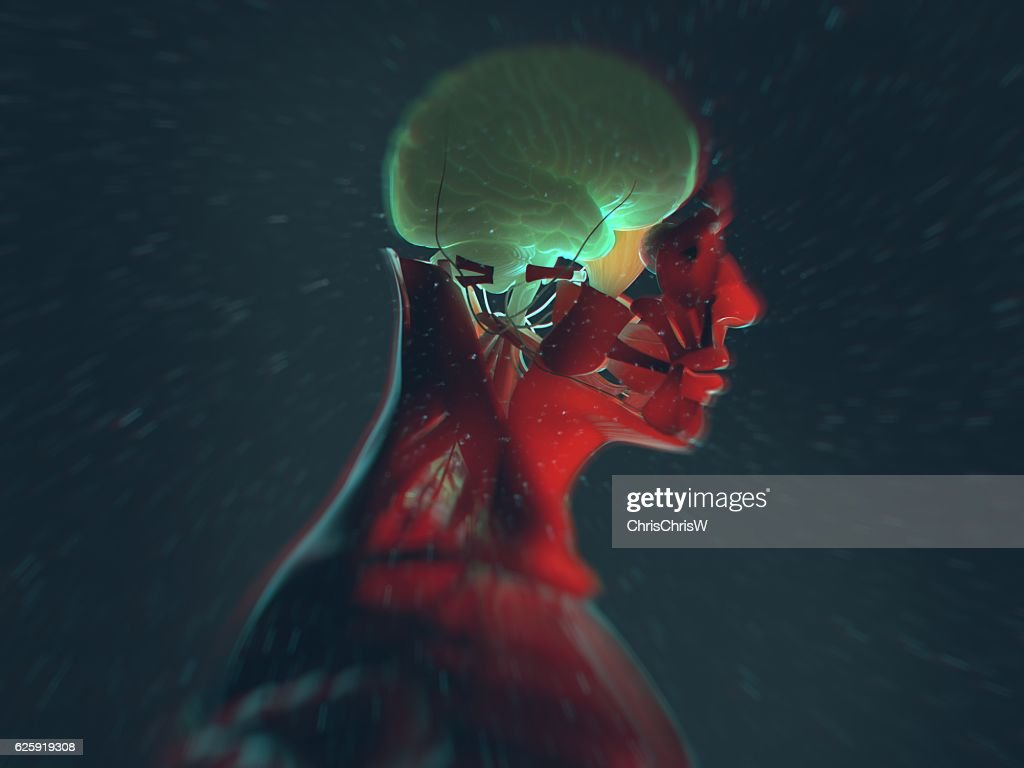 Humany Anatomy Brain 3d Illustration Stock Illustration | Getty Images