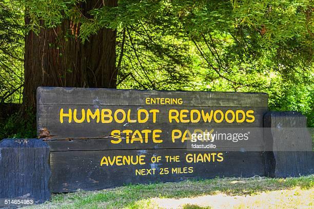 humbodlt redwoods state park, california - humboldt redwoods state park stock photos and pictures