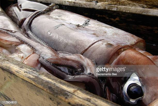 A Humbolt Giant Squid waits to be cleaned January 26 2006 The jumbo squid now thought to be lurking off the Pacific Northwest coast could be a threat...