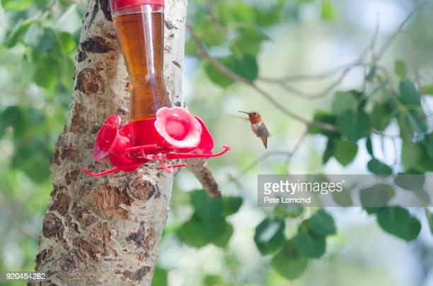 Humming bird and bird feeder