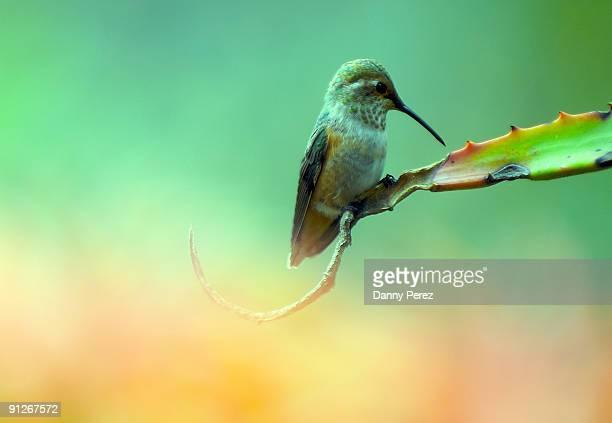 Hummingbird Afternoon