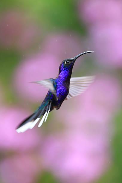 Hummingbird in air