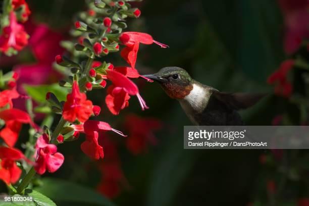Hummingbird in the Garden Shadows