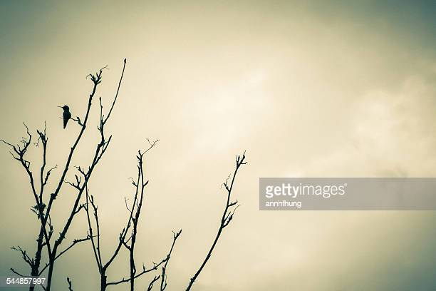 hummingbird - richmond british columbia stock photos and pictures