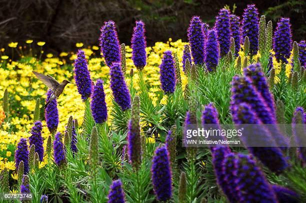 Hummingbird pollinating flowers in a garden