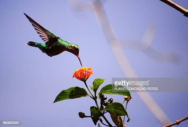 Hummingbird small sized bird