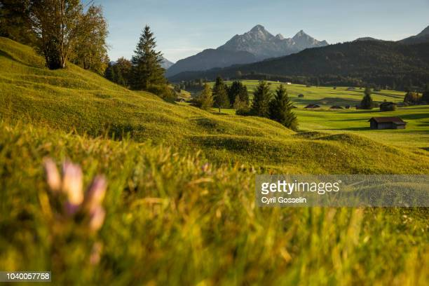 hump meadow near mittenwald - mittenwald stock pictures, royalty-free photos & images