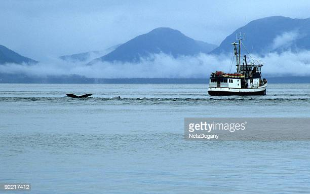 Humpback Whale and Boat