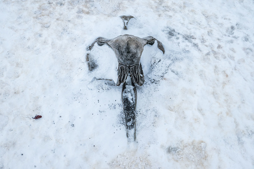 Humpback whale skull buried in the ice in Antarctica - gettyimageskorea