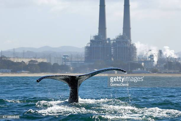 Humpback Whale with Tail Raised and Power Plant in Background