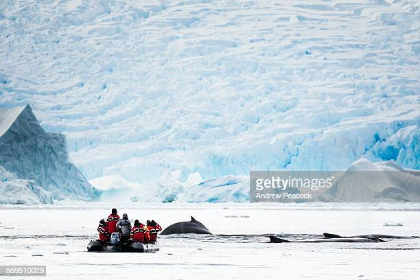 humpback whales and tourists, cierva cove - antarctica stock pictures, royalty-free photos & images